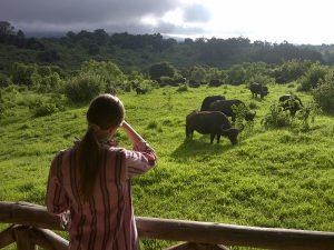buffalo-lodge1