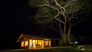 kisura-camp-by-night-1