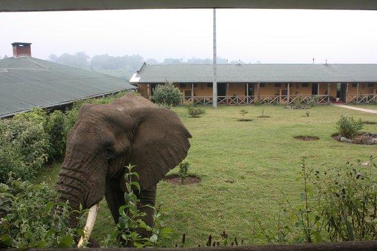 ngorongoro-rhino-lodge-1