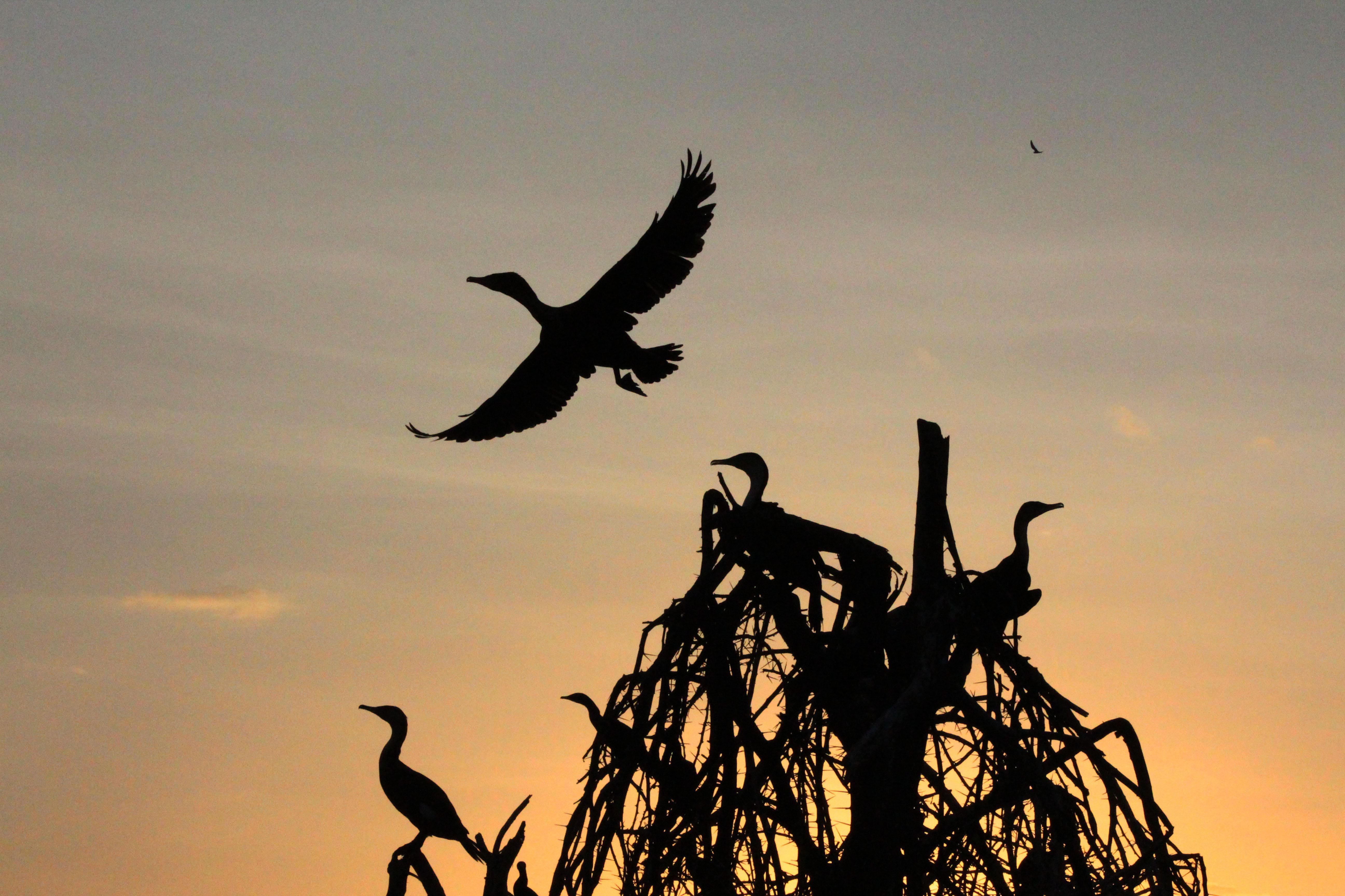 aves-safari-bike-africa