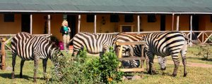 cebras-rhino-safari-bike-africa