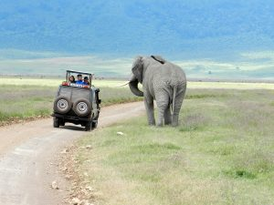 coche-elefante-safari-bike-africa