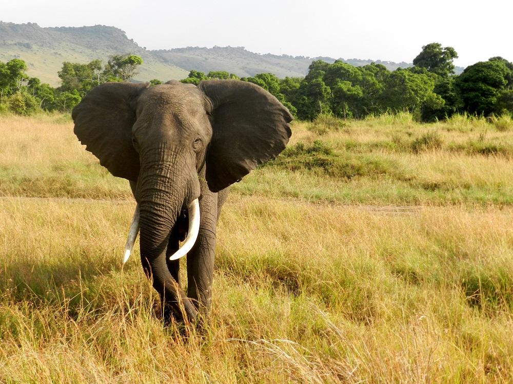 elefante-safari-jungle