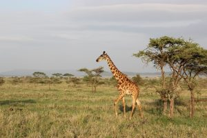 lago-manyara-safari-bike-africa