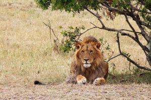 leon-safari-jungle