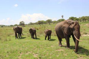 manda-elefantes-safari-bike-africa