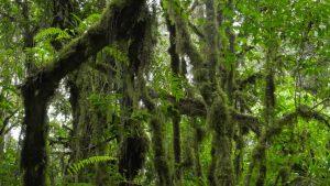rainforest-kilimanjaro-min