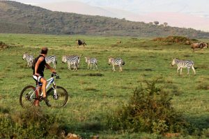 safari-biking-bici-1
