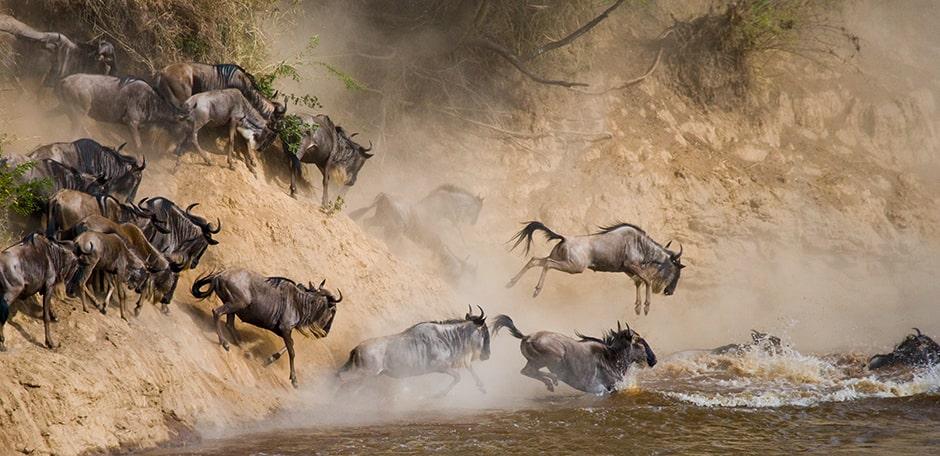 safari-la-gran-migracion-serengueti-10