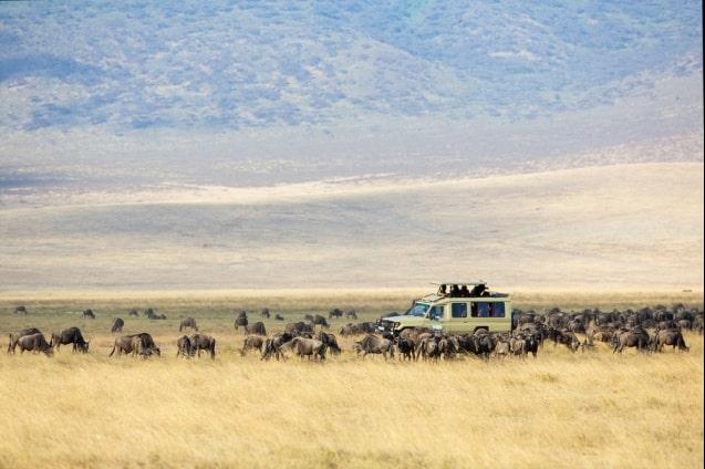 safari-la-gran-migracion-serengueti-11