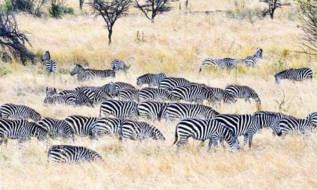 safari-la-gran-migracion-serengueti-12