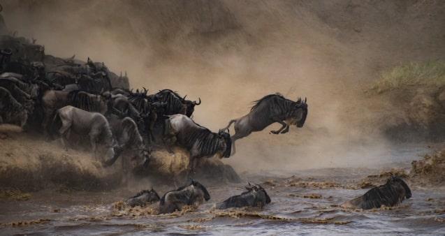safari-la-gran-migracion-serengueti-13