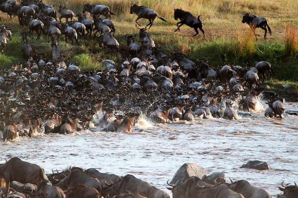 safari-la-gran-migracion-serengueti-14