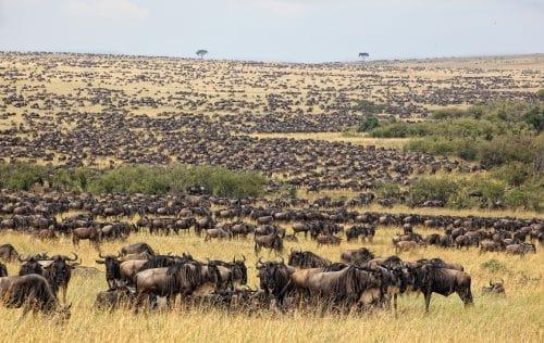 safari-la-gran-migracion-serengueti-15