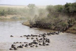 safari-la-gran-migracion-serengueti-2