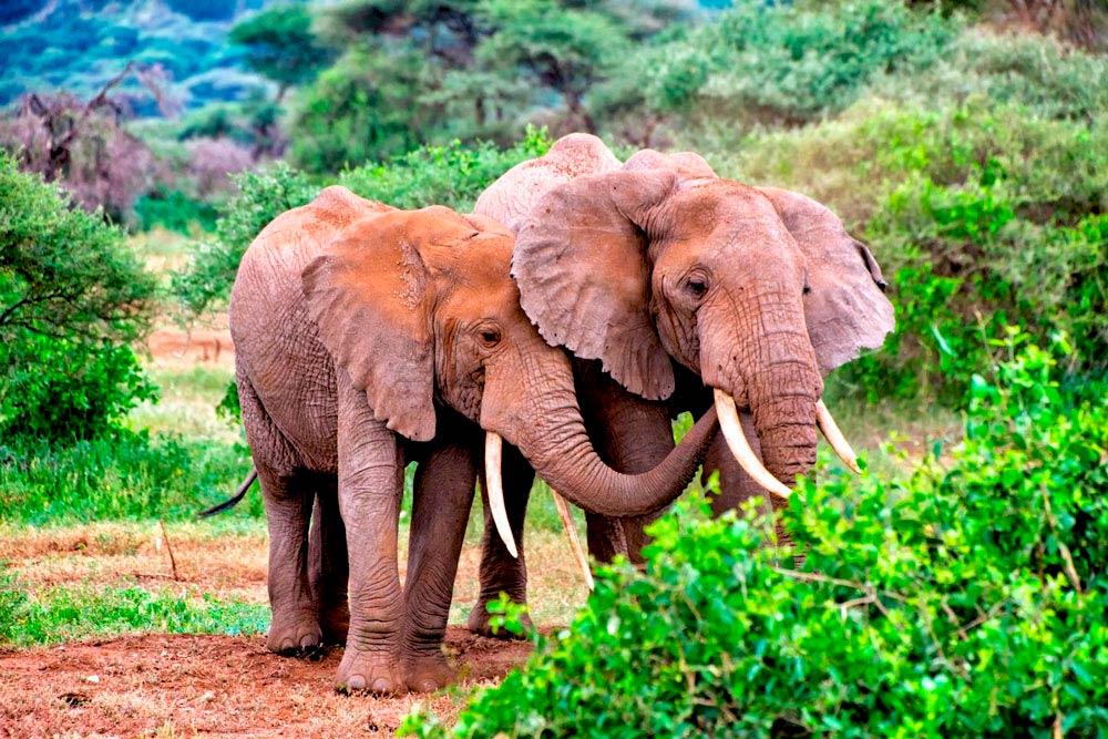 safari-la-gran-migracion-serengueti-3