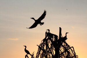 safari-la-gran-migracion-serengueti-6