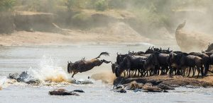 safari-la-gran-migracion-serengueti-8