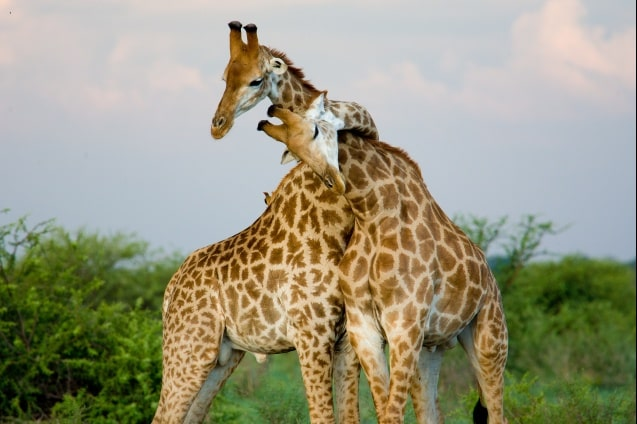 safari-lo-mejor-de-tanzania-1