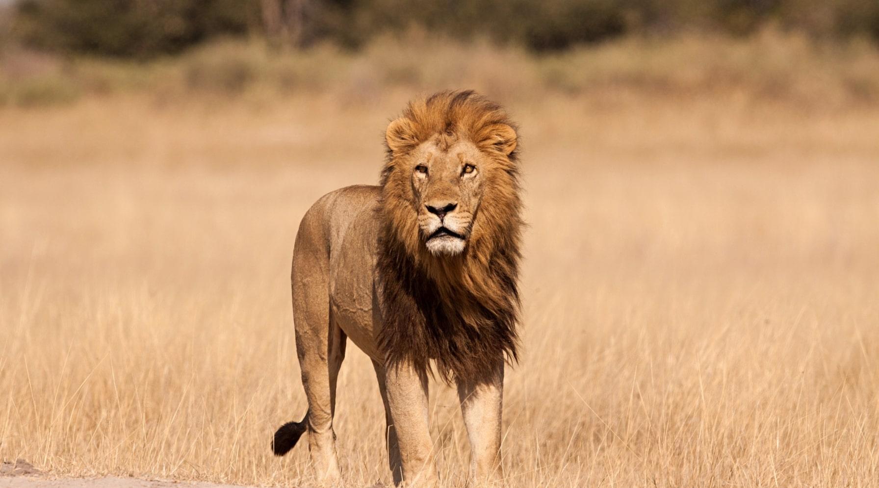 safari-lo-mejor-de-tanzania-10