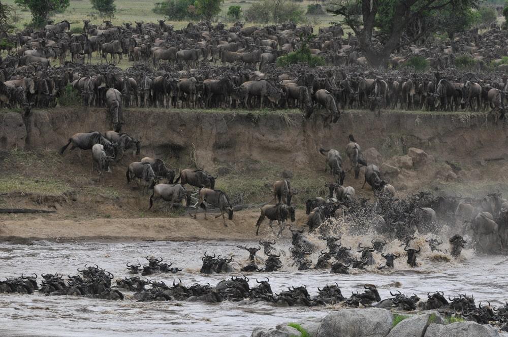 safari-lo-mejor-de-tanzania-11