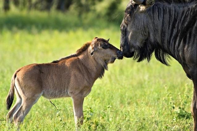 safari-lo-mejor-de-tanzania-12