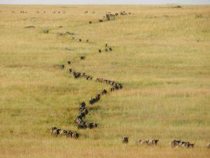 safari-lo-mejor-de-tanzania-2
