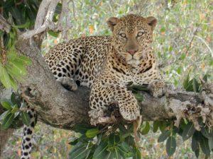 safari-lo-mejor-de-tanzania-3