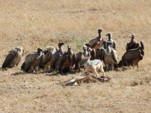 safari-lo-mejor-de-tanzania-4
