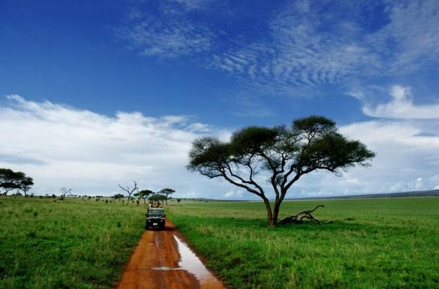 safari-lo-mejor-de-tanzania-9