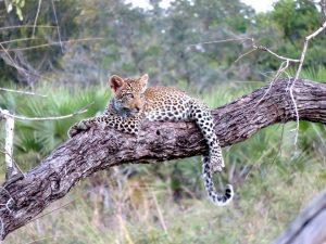 safari-tribus-tanzania-1