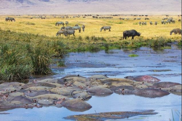 safari-tribus-tanzania-3