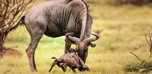 safari-tribus-tanzania-4