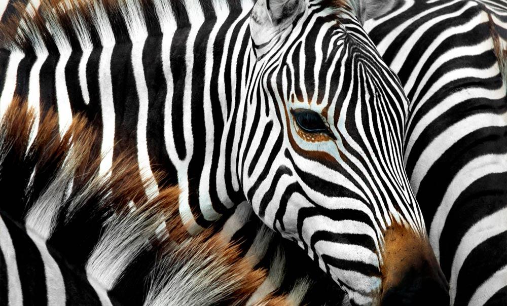 safari-tribus-tanzania-5