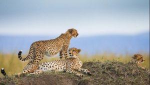 safari_clasico_tanzania-1
