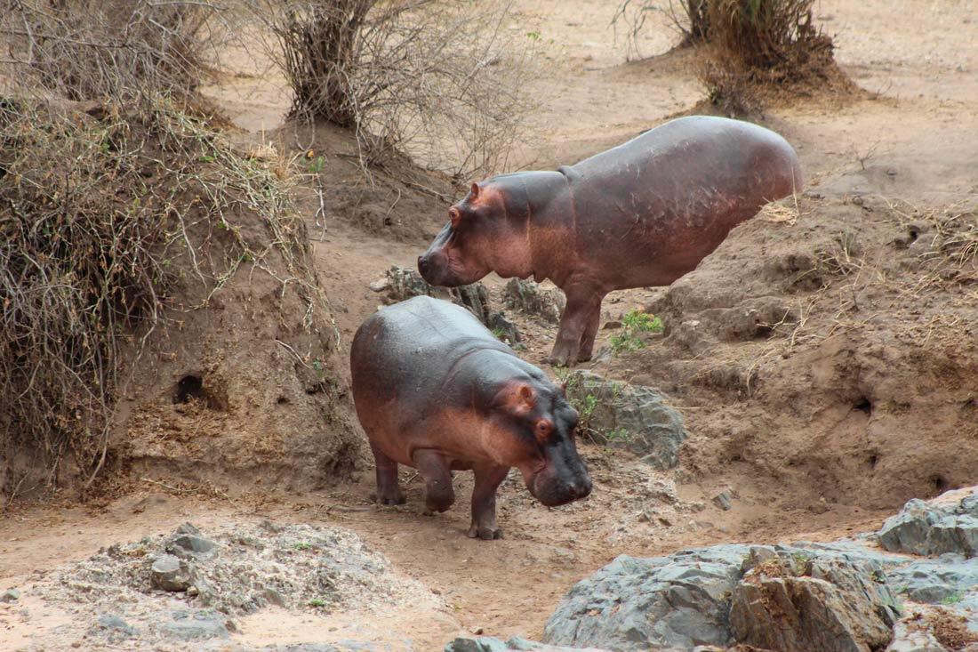 safari_clasico_tanzania-5