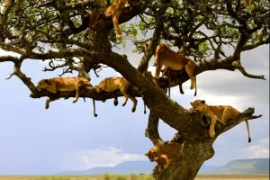 safari_clasico_tanzania-7