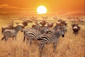 safari_clasico_tanzania-8