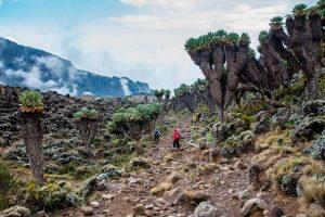 safaris-trekking-kilimanajaro-rongai-1
